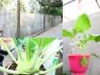 Nhà đẹp - Gia đình trí thức sửa bãi hoang làm vườn rau ngọt mát