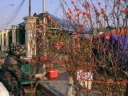 Tin trong nước - Đào sớm trên chợ hoa Quảng Bá