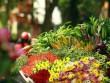 Tin tức - Hà Nội đẹp lạ qua 12 mùa hoa, 12 màu sắc khác nhau