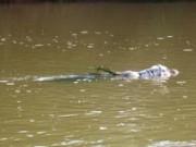 Tin tức - Mẹ ngất xỉu khi phát hiện xác con trong bao tải trôi sông