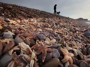 Tin tức - 22 bức ảnh đẹp về cuộc sống bầy đàn của động vật hoang dã