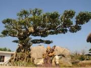 Nhà đẹp - Mục kích vườn cây cảnh bạc tỷ ở Nam Định