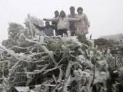 Tin tức - Đêm nay 9-1 có thể xuất hiện băng giá ở Sa Pa, Mẫu Sơn