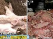 Tin tức - Cảnh sát TQ phát hiện 1.000 tấn thịt lợn nhiễm độc