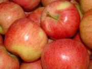 Sức khỏe - 6 lí do quan trọng bạn nên ăn táo hàng ngày
