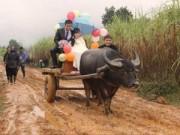 Tin trong nước - Màn rước dâu bằng xe trâu độc đáo của cặp đôi xứ Nghệ