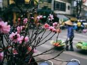 Tin tức - Ngắm chợ đào sớm trên phố Hàng Lược