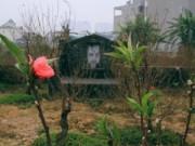 Tin tức - Làng đào nghĩa địa giữa lòng Thủ đô