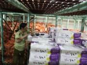 Mua sắm - Giá cả - Tạm giữ hơn 55 tấn củ - quả Trung Quốc, Hàn Quốc