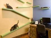 Xem & Đọc - Mèo đại gia ở nhà tiền tỷ