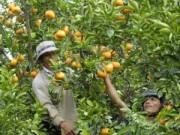 Mua sắm - Giá cả - Hốt bạc nhờ bán trái cây bày mâm ngủ quả