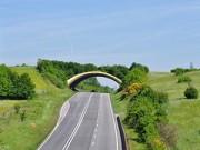 Đi đâu - Xem gì - Những cây cầu đặc biệt dành riêng cho động vật