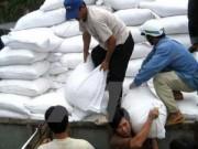 Tin tức - Hỗ trợ 13.000 tấn gạo cho nhân dân dịp tết Nguyên đán