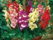Nhà đẹp - Cách cắm hoa lay ơn đơn giản ngày Tết