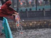 Pháp luật - Muôn kiểu thả cá chép tiễn Táo quân chầu trời