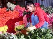 Tin tức - Hoa hồng Đà Lạt tăng giá gấp 5 lần trước Valentine