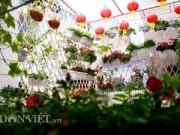 Nhà đẹp - Vườn hoa xuân tuyệt đẹp trên ban công 15m vuông