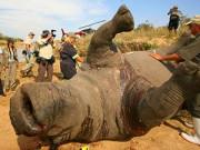Tin tức - Giữ sừng tê giác ở Lục Địa Đen