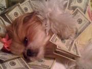 Tin quốc tế - Cuộc sống sung sướng của những chú chó nhà giàu