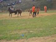 Tin tức - Đầu xuân xem chọi ngựa độc đáo tại Hà Giang