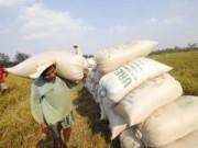Mua sắm - Giá cả - Tranh nhau mua lúa tạm trữ