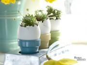 Tin tức nhà đẹp - Chị em thích mê trồng cây nhanh, rẻ bằng vỏ trứng