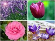 Nhà đẹp - Xuân này trồng hoa gì cho cả năm rực rỡ