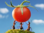 Nhà đẹp - 12 phương pháp diệt kiến tự nhiên