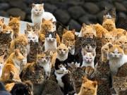 Xem & Đọc - Kỳ lạ hòn đảo mèo ở Nhật Bản