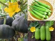 Nhà đẹp - Những loại quả dễ nấu, dễ ăn, dễ trồng vào tháng Ba