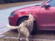 Clip Eva - Lạ lùng đàn chó quay lại báo thù