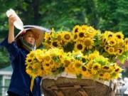 Tin trong nước - Đầu tuần thời tiết Hà Nội chuyển tốt dần, trời hửng nắng