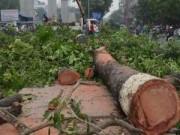 """Tin tức - Hà Nội chặt hạ 6.700 cây xanh: """"Hầu hết người dân ủng hộ"""""""