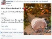 Tin trong nước - Facebooker nổi tiếng nói gì về việc chặt cây ở Hà Nội?