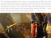 Dạy con - Xúc động bố HN và con trai thắt nơ cho cây trước khi bị chặt