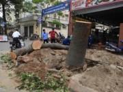 """Tin trong nước - Chặt 6.700 cây xanh: Hà Nội chốt ngày """"trả nợ"""" 21 câu hỏi"""