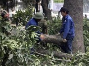 PGĐ Sở Xây dựng Hà Nội nói gì khi phải kiểm điểm vì vụ chặt cây xanh?