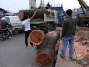 Tin tức - Chặt cây, PGĐ Sở Xây dựng HN nói gì khi phải kiểm điểm?