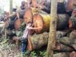 'Đột nhập' nơi nghi tập kết gỗ bị chặt tại Hà Nội