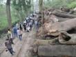 """Vụ 6700 cây xanh: """"Không có chuyện bán gỗ ra ngoài"""""""