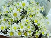 Nhà đẹp - Chọn hoa tảo mộ không phạm cấm kị tâm linh