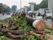 Tin trong nước - Chặt cây trên đường Nguyễn Trãi: Đúng quy trình nhưng sai luật