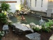 Nhà đẹp - Cao Thái Sơn khoe hồ cá mới to như bể bơi