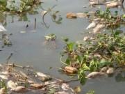 Tin tức - Lý giải nguyên nhân cá chết hàng loạt trên sông Đồng Nai