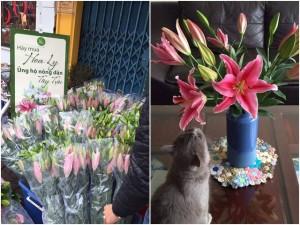 Người dân chung tay giải cứu hoa ly nở sớm trước Tết