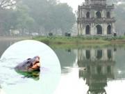 Cụ rùa Hồ Gươm đã qua đời chiều nay