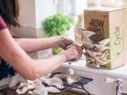 10 ngày trồng nấm sò an toàn tại nhà
