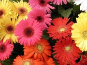 Nhà đẹp - Mẹo cắm hoa Tết rước lộc vào nhà