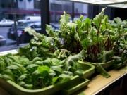Nhà đẹp - 14 loại rau, củ, quả lý tưởng trồng trong nhà