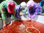 Tin tức - Chợ cá chép đỏ lớn nhất Thủ đô trước ngày Táo quân
